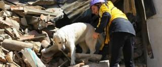 Terremoto, i cani da macerie che aiutano i soccorritori: hanno salvato 60 persone