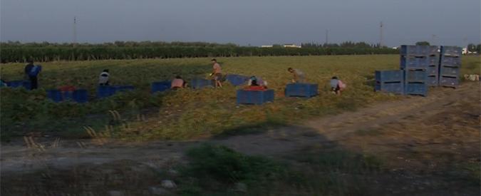 Caporalato, viaggio nel ghetto dei bulgari rom che raccolgono uva e pomodori