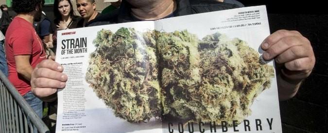 Cannabis, quanta paura di una pianta