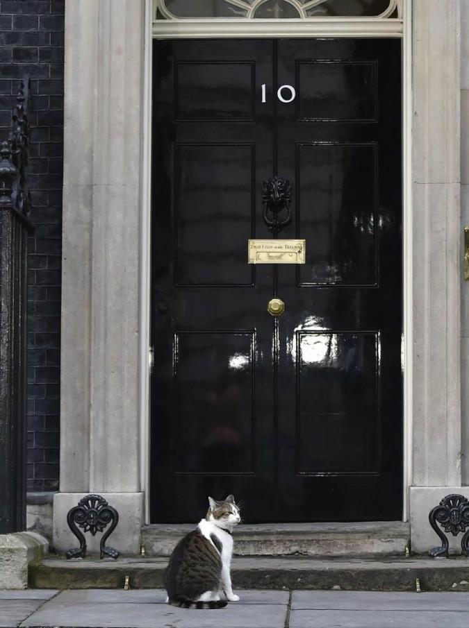 Downing Street, il gatto Larry ha un nemico: liti con il collega Palmerston. Chiamato un esperto