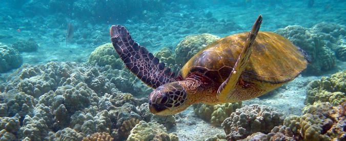 Usa: grazie a Obama alle Hawaii ci sarà la più grande riserva marina al mondo