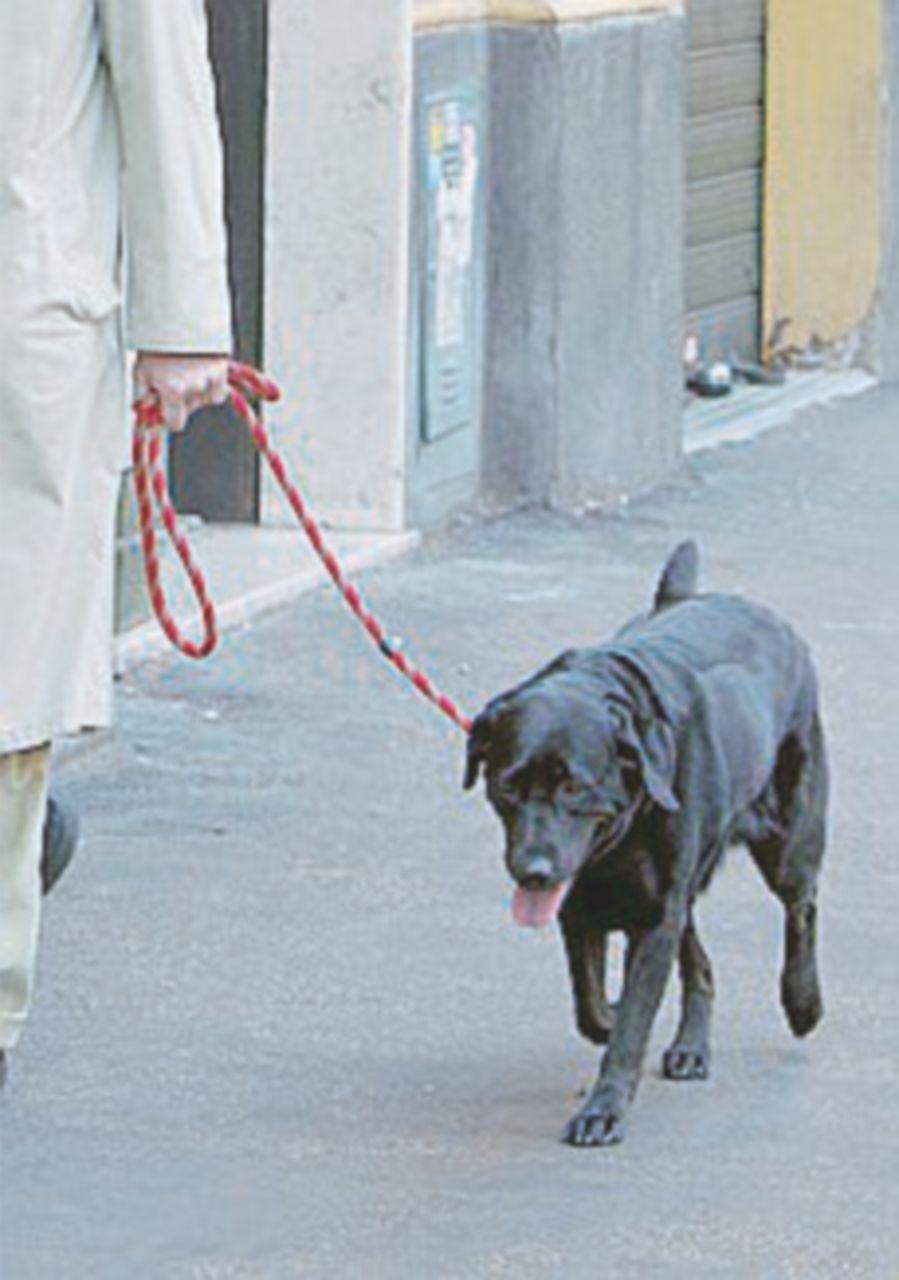 Passa poco tempo con il suo cane e viene condannato