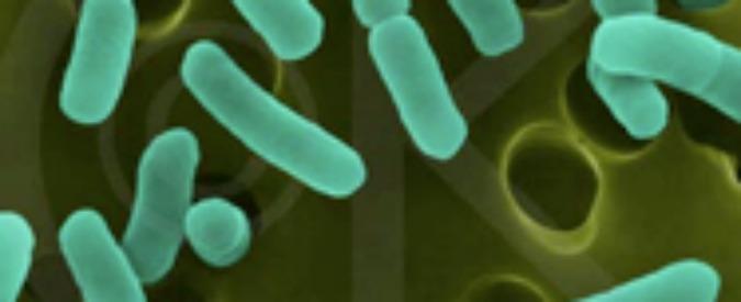 """Antibiotici, molecola """"disinnesca"""" l'enzima che produce resistenza"""