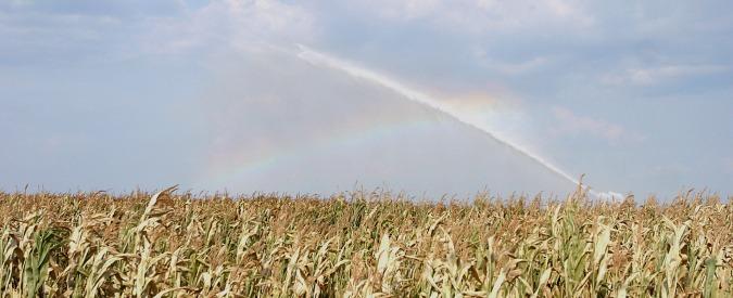 """Prezzo del mais, Coldiretti attacca: """"Quello nazionale di qualità quotato meno di quello extracomunitario"""""""