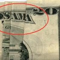 osama dollaro