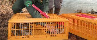 """Bracconaggio, la riforma delle Province taglia il numero di guardiacaccia. La denuncia del Wwf: """"40% in più di animali uccisi illegalmente"""" (FOTO)"""
