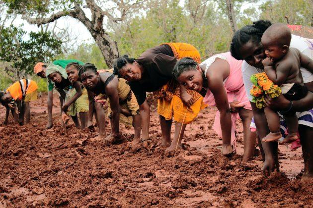 Coltivazioni in Madagascar