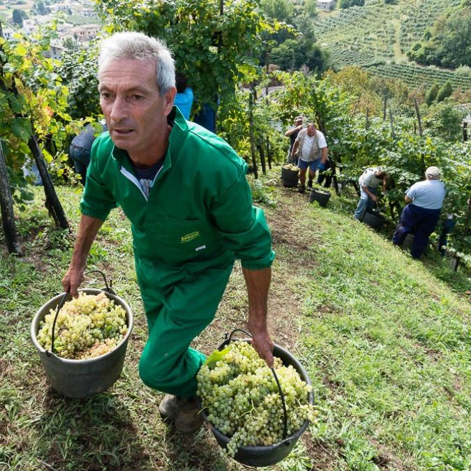 In Valdobbiadene, defilata e preziosa contea del Prosecco Superiore: cosa vedere e dove degustare il pregiato vino (FOTO)