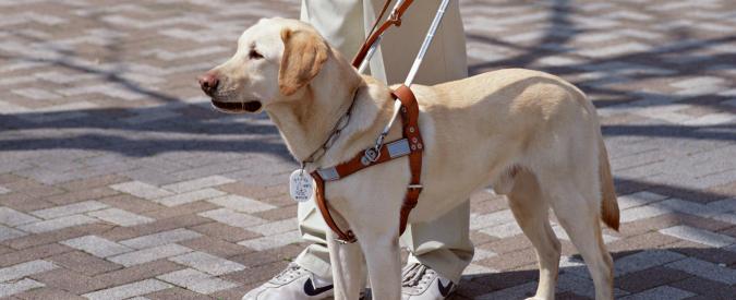 Cani guida: la legge c'è, ma nessuno lo sa. L'odissea dei non vedenti