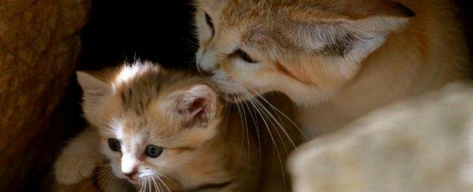 """Iraq, la fatwa dell'Isis contro i gatti. """"Vietato tenerli in casa"""""""