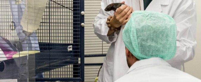 """Sperimentazione animale, """"Italia troppo restrittiva. Rischio di un'ondata di cervelli in fuga"""""""