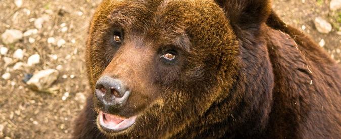 'Un orso ha le sue ragioni', e dobbiamo imparare a conviverci