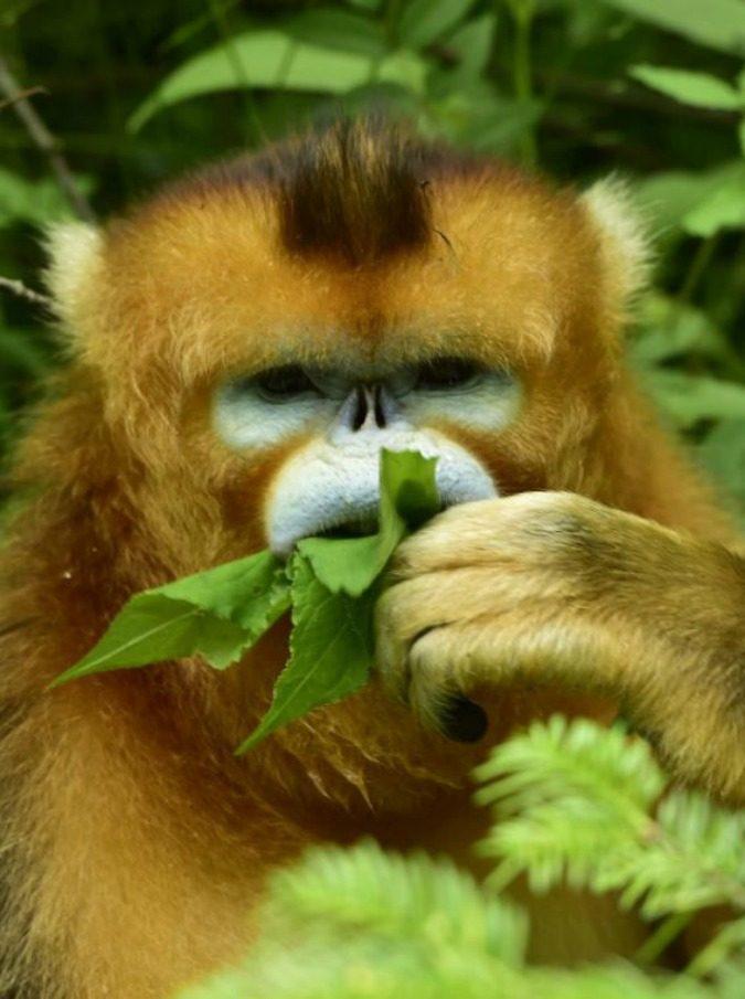 scimmia905