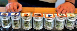 """Usa 2016. L'ALTRO VOTO 2/ Coltivatori di cannabis in California: """"No legalizzazione a scopo ricreativo, rischio monopolio"""""""