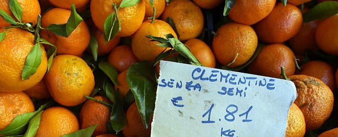 """Puglia, non solo Xylella: agrumeti a rischio col virus Tristeza. Coldiretti: """"Servono controlli sulle importazioni"""""""