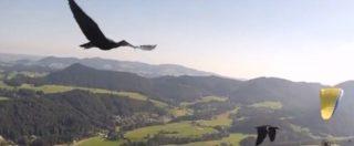 Brescia, ucciso Ibis eremita protetto: forse ultimo esemplare in Europa