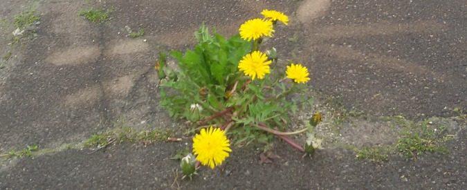 'Verde brillante': le piante sono intelligenti, ma non ce ne siamo mai accorti
