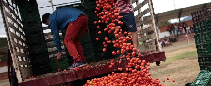 Pomodoro, i motivi della crisi: tra disorganizzazione del settore e prezzi stracciati, così muore l'oro rosso