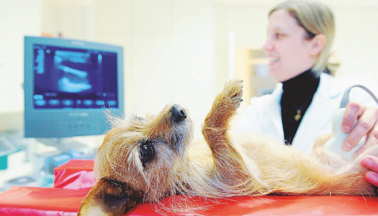 Il folle business delle medicine per animali: prezzi alle stelle