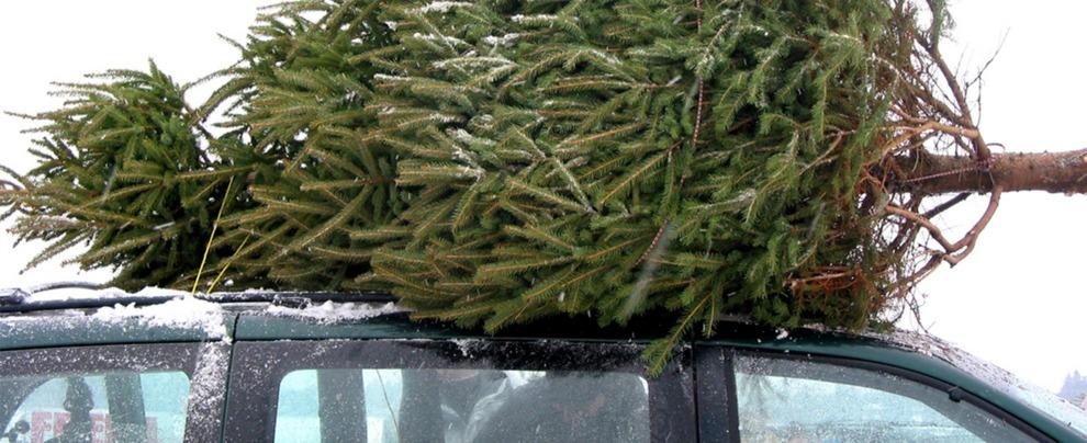 Albero di Natale, ecco come trasportarlo in macchina evitando la multa
