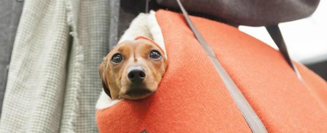 Al lavoro in ufficio con il proprio cane, in un Comune del Piacentino si può