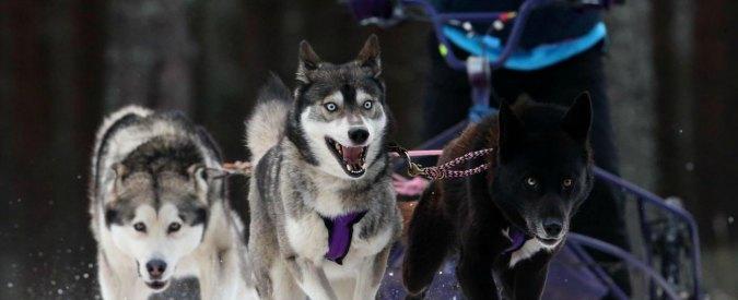 Animali maltrattati, nasce sul web la protesta contro la corsa con i cani da slitta in Alaska