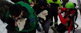 """Hotel Rigopiano, trovati vivi i tre cuccioli figli di Nuvola e Lupo. """"Stanno bene"""" – (FOTO e VIDEO)"""