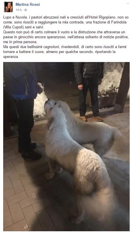 """Slavina su hotel, """"due dei cani dell'albergo sono arrivati a casa mia sani e salvi. Non so come"""""""