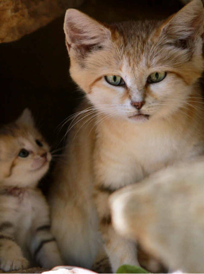 """Festeggiano la fine della scuola buttando una gattina dal secondo piano: """"Bocciateli"""""""