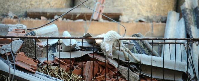 Terremoto, la sofferenza degli allevatori e dei loro animali. 'Gelo, stalle crollate e troppa burocrazia. Aiuti o andiamo via'