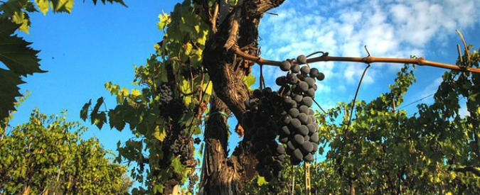Vini, tre idee (splendide) di Sangiovese