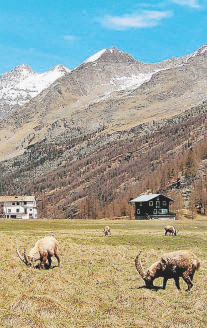 Una legge per distruggere i parchi nazionali