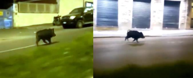 Roma, si scontra in scooter con un cinghiale: 49enne muore in zona Cassia