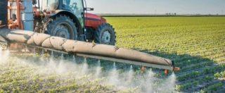 """Glifosato, l'agenzia Ue: """"Non è cancerogeno"""". Ma 20 ong: """"Troppi conflitti d'interesse con aziende chimiche"""""""