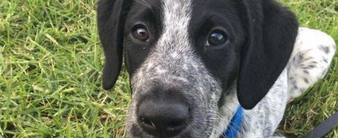 Cucciolo scappa sulle piste dell'aeroporto di Auckland: abbattuto dalla polizia