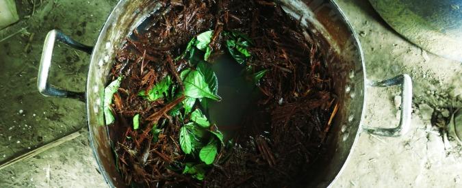 L'ayahuasca è una cosa serissima, usarla per sballarsi è da stupidi