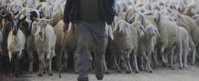 Pastore sardo chiede aiuto a Bill Gates, 'Vorrei che visitassi questa terra'