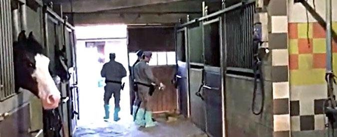 Torino, denuncia maltrattamento cavalli, i titolari del maneggio gli rompono le braccia a bastonate e lo pestano per ore