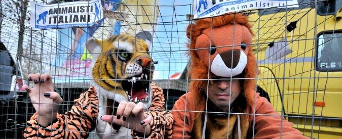 """Circo, ddl vieta l'impiego degli animali. Giovanardi: """"Ingiusto, allora proibiamone uso a chi salva la gente sotto le valanghe"""""""