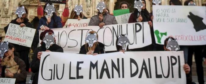 Wolf day, giù le mani dai lupi: difenderli è una necessità