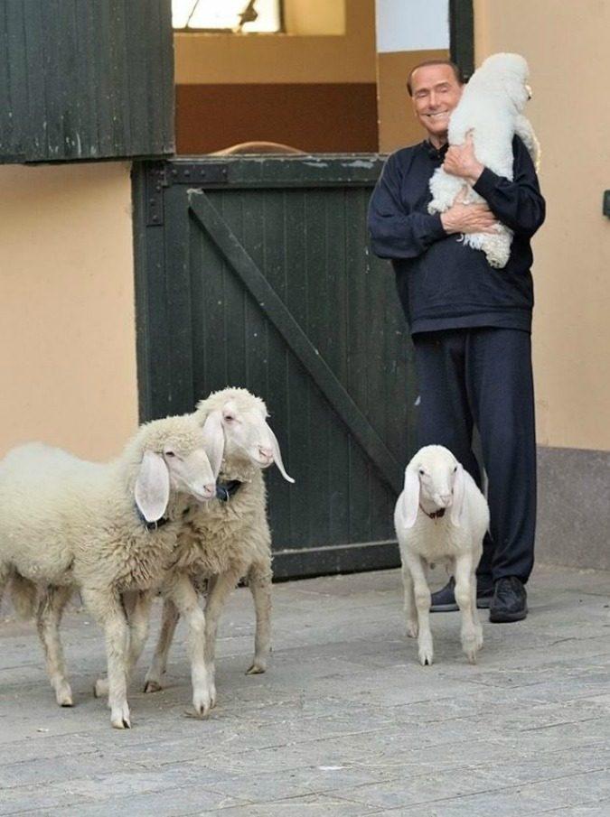 """Silvio Berlusconi ospite di Dalla Parte degli Animali, circondato da cani e agnellini: """"Sanno amare e essere amici che non si separano mai da noi"""""""