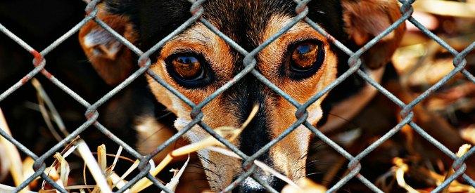 Cina, al festival di Yulin scatta divieto temporaneo di vendere carne di cane: multe e arresto per trasgressori