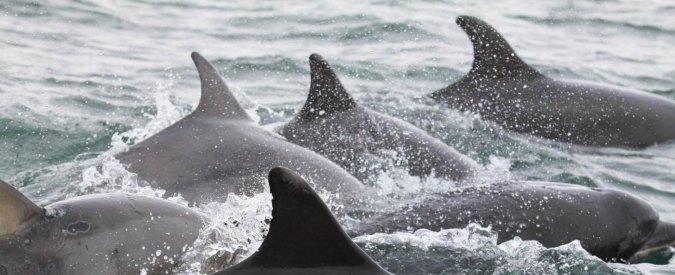 Sardegna, carcasse di delfini mutilati: indaga la Capitaneria di Porto