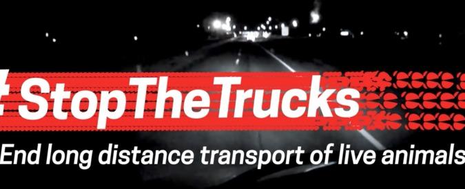 """Stop the Trucks, un milione di firme per migliorare le leggi sul trasporto degli animali: """"Ora compromesso il benessere"""""""