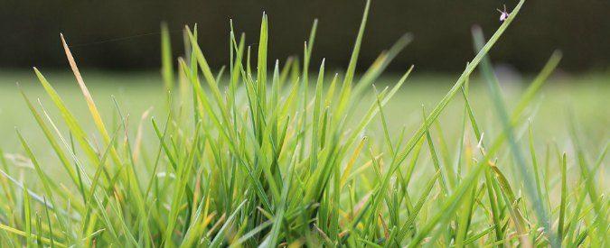 L'erba del vicino, nei romanzi di Monte la provincia diventa un grottesco universo
