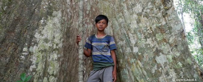 Giornata mondiale Ambiente, 'lontano dalla nostra foresta ci sveglia il rumore dei macchinari'