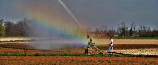 """Siccità, Coldiretti: """"Precipitazioni in calo del 65%"""". Laghi a secco in Sila: """"Non coltivate, da settembre senza acqua"""""""