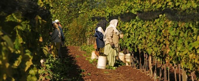 """Taranto, bracciante 39enne muore nei campi: indagato il titolare dell'azienda agricola. Pm: """"Omicidio colposo"""""""
