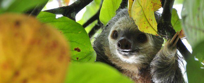 Dieci anni di ritardo sul Nord, perché il Sud cresce (poco) e alla velocità di un bradipo