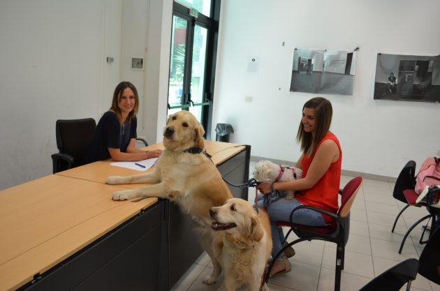 Teramo, università apre alla pet therapy in via sperimentale: possibile sostenere gli esami accompagnati da un cane